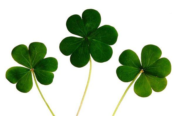 Saint Patrick's Day, czyli Dzień Świętego Patryka